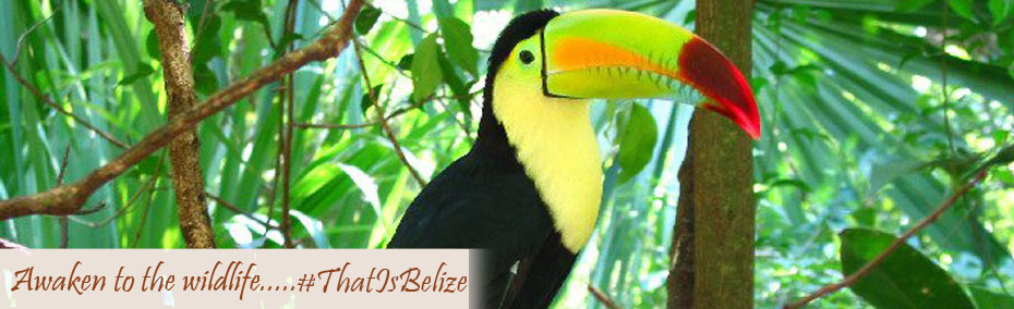 Awaken to the wildlife... that is Belize